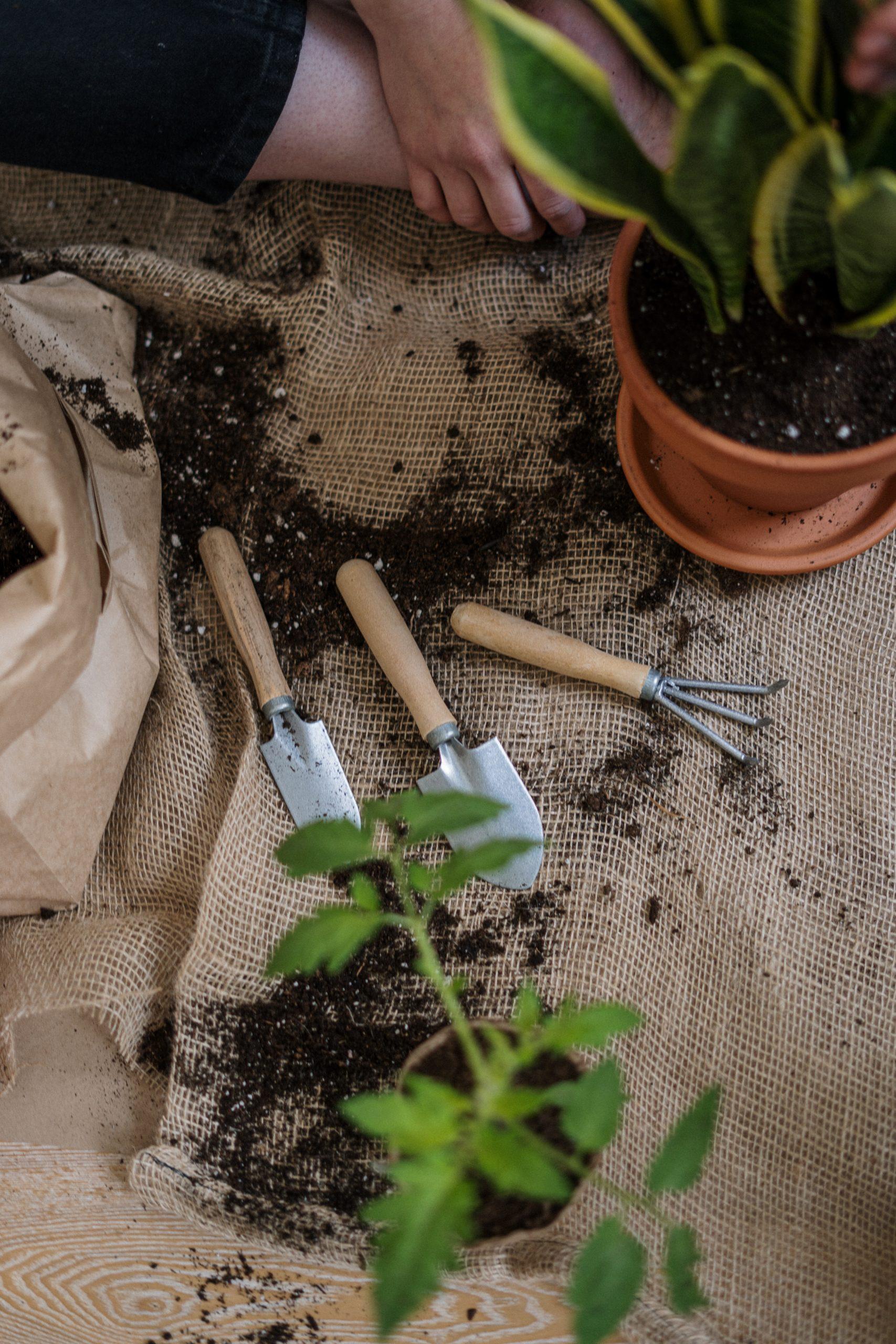 Solution de fertilisation pour vos plantes et gazons.